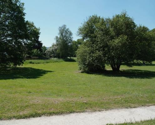 Field in West Wood