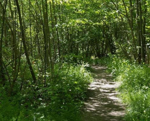 footpath into West Wood